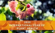 2020 Año Internacional de la Sanidad Vegetal